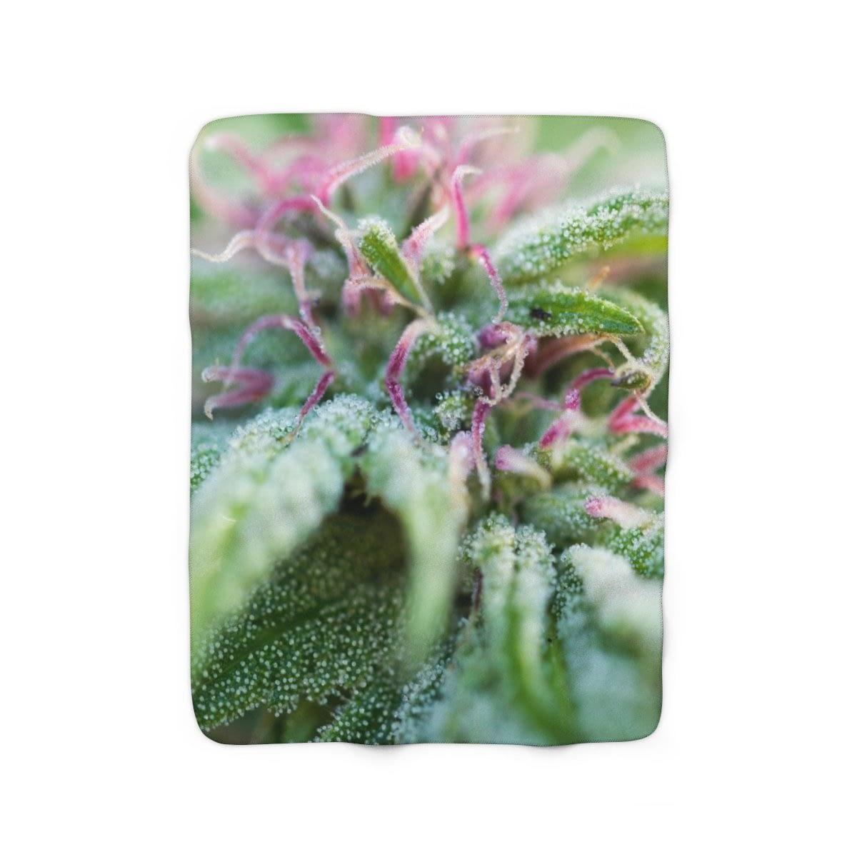 Blooming With Purple Cannabis Sherpa Fleece Blanket